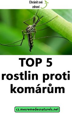 TOP 5 rostlin proti komárům Citronella, Health Fitness, Detox, Tops, Ideas, Thoughts, Fitness, Lemon Grass, Health And Fitness