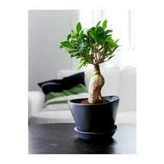 "BIGARRÅ Plant pot with saucer, black indoor/outdoor, black - indoor/outdoor/black - 12 ½ "" - IKEA"
