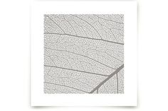 Leaf by Anna at minted.com