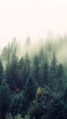 Foggy Forest ★ Download more Nature Inspired iPhone Wallpapers at www.preppywallpapers.com and follow us on Pinterest @prettywallpaper