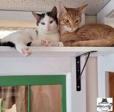 Larry and Monty just met. Why can't we all be like them! #CatCafe #catsandcoffee #adoptacat #catadoption #adoptdontshop #rescuecatsofinstagram #catpicoftheday #catstagram #lovecats Instagram News, Cats Of Instagram, Cat Cafe, Larry, Adoption, Animals, Foster Care Adoption, Animales, Animaux