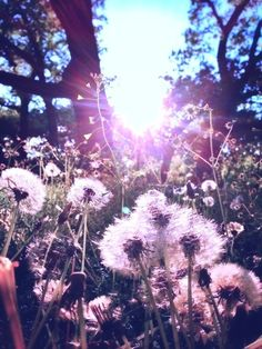 Image uploaded by Kati. Find images and videos about nature, flowers and dandelion on We Heart It - the app to get lost in what you love. Cute Backgrounds, Phone Backgrounds, Cute Wallpapers, Wallpaper Backgrounds, Of Wallpaper, Iphone Wallpaper, Dandelion Wallpaper, Whatsapp Wallpaper, Foto Art