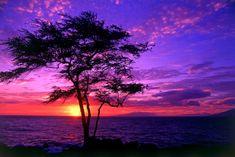 Árvore, mar e amanhecer