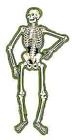 Use The Jointed Skeleton For Your Halloween Decorations This Year. Shop  Halloween Decorations At Dean Supply.