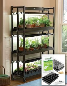 Grow an indoor vegetable garden and enjoy your own fresh organic vegetables. What to know for starting vegetable gardens indoors from seeds. Get veggie growing tips, growing under lights, fertilizer.
