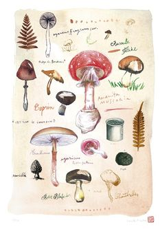 Mushroom poster, Fungi print, Watercolor botanical art, Natural history illustration, Kitchen decor via Etsy Art And Illustration, Food Illustrations, Impressions Botaniques, Illustration Botanique, Art Watercolor, Mushroom Art, Kitchen Art, Kitchen Walls, Kitchen Decor