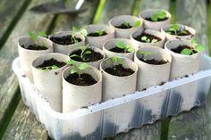 Indoor Planters - Homemade Toilet Paper Roll Crafts, http://hative.com/homemade-toilet-paper-roll-crafts/,