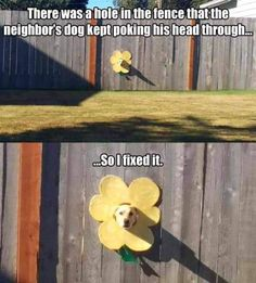 the-dog-in-the-fence funny animal pictures pictures funny Animals - Humor Memes 9gag Funny, Funny Dog Memes, Funny Animal Memes, Cute Funny Animals, Funny Animal Pictures, Cute Baby Animals, Funny Cute, Funny Dogs, Dog Funnies