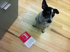 Libby wanted to ask you if you heard about our Open House in San Francisco, © Innovant, Inc.