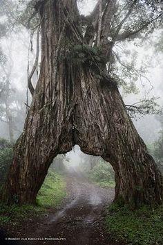 Into the Mystic, Arusha National Park, Tanzania