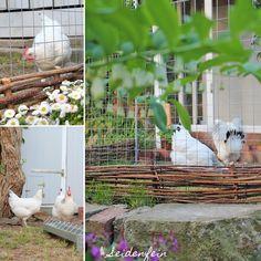 Hühner - Kuchen - Gartenzeit, mein Shop & das Finanzamt * hens cake gardening & my Shop & the tax office was in the house Dekoblog, Shops, Gardening, Clematis, Cake, Hens, Chicken Cake, Animals, Tents