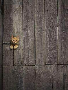 Peek a Boo.
