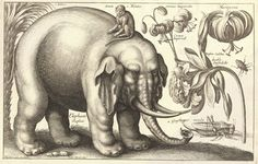 hollar-wenceslas_hollar_-_elephant_and_flowers_state_2bez-kompr.jpg (1600×1018)