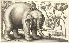 hollar-wenceslas_hollar_-_elephant_and_flowers_state_2bez-kompr.jpg (1600×1018)