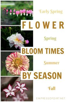 Herb Garden Design Grab this list of flower bloom times through the seasons to plan your garden from spring to fall. Garden Design Grab this list of flower bloom times through the seasons to plan your garden from spring to fall. Early Spring Flowers, Spring Blooms, Fall Flowers, Colorful Flowers, Table Color, Flower Landscape, Garden Soil, Flower Gardening, Garden Signs