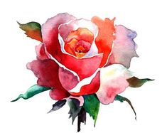 This is a print from my original watercolor painting ♦ Sizes: ♦ inches, cm) leaving extra for matting ♦ inches, cm) leaving extra for matting ♦ inches, cm) - with a extra small border for framing - printed on / x ♦ Printed on fine art paper Watercolor Rose Tattoos, Watercolor Flowers, Watercolor Paintings, Rose Sketch, Pastel Art, Botanical Art, Watercolor Illustration, Flower Art, Art Floral