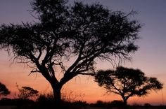 very special. This one was in Chizarira National Park, Zimbabwe African Life, African Sunset, Us Map, Zimbabwe, Us Travel, Beautiful Places, National Parks, Spaces, People