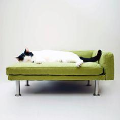 modern pet chaise lounge