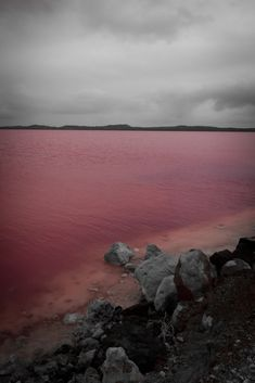 Australia's Pink Lake. I must see this someday.