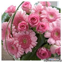 http://www.friends18.com/img/flowers2/0280.gif
