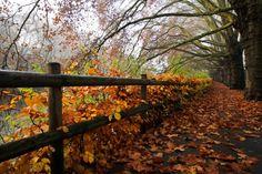 How I love Autumn-time!