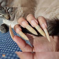 Long Natural Nails, Long Nails, Curved Nails, Nails Only, Crazy Nails, Cute Acrylic Nails, Dental Technician, Finger, Nail Art