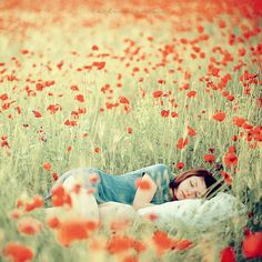 A poppy field of dreams Psychic Dreams, Field Of Dreams, Just Dream, Cecile, Favim, Design Shop, Beautiful World, Beautiful Dream, Beautiful Flowers