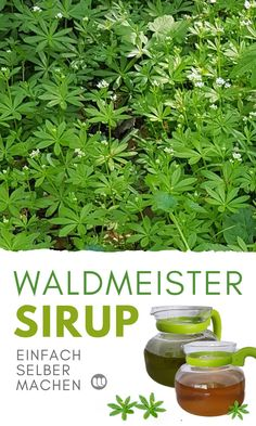 Make Waldmeister syrup yourself: Recipe & Tips for Waldmeist .- Woodruff Syrup Recipe: Create Woodruff Syrup Source by wirtestenundberichten - Health Care Reform, Natural Make Up, Food Hacks, Hacks Diy, Outdoor Gardens, Healthy Life, Diet Recipes, Smoothies, Harvest