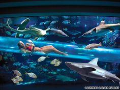 Golden Nugget Hotel, Las Vegas - Guests can enjoy a 3-story water slide, which shoots you straight through a 200,000 gallon shark-filled aquarium (in the middle of a swimming pool).