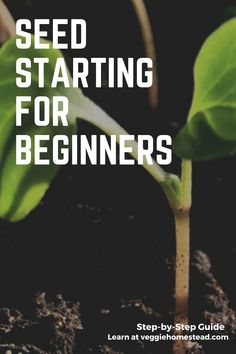 Step-by-Step guide to help get you started with indoor vegetable growing. This guide will give you all the things you need to know to grow on your own. Starting Vegetable Seeds, Seed Starting, Growing Vegetables, Step Guide, Home And Garden, Indoor, Learning, Plants, Recipes