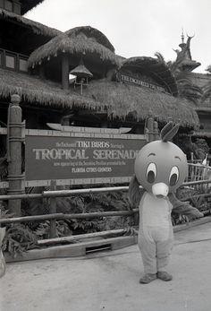 Florida Citrus Growers' Orange Bird at the Enchanted Tiki Birds Tropical Serenade in Adventureland, Magic Kingdom, Walt Disney World, FL, July Walt Disney Co, Old Disney, Disney Love, Disney Parks, Disney Trivia, Orlando Disney, Disney Cruise, Disney Insider, Orange Bird
