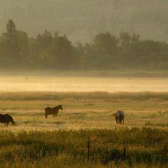 Hamilton, Montana morning