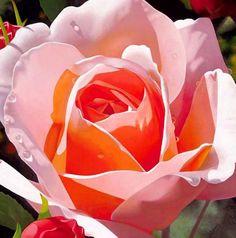 Rosas al Óleo deBrian Davis Cuadros de Rosas Pintados en Óleo Sobre Lienzo Pinturas de Rosas Rosas Pintura en Óleo Arte en Pinturas de Fl...