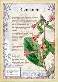 (disambiguation) Foxglove, the plant genus Digitalis Foxglove may also refer to: Healing Herbs, Natural Healing, Flora, Growing Herbs, Vintage Crafts, Types Of Plants, Natural Life, Medicinal Plants, Book Of Shadows