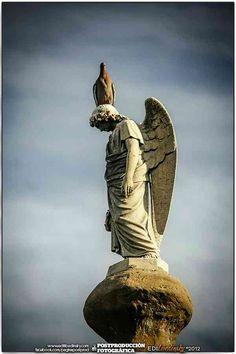 Cementerio de la Recoleta 2012