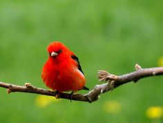 Backyard Wildlife Color: RED