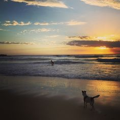Good morning from Sunshine Beach! We can't think of a better way to start the day than sunrise and an ocean swim.