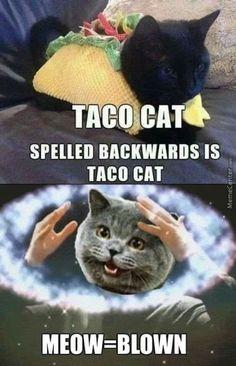 Meow=blown