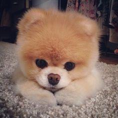 Boo Boo is so darn adorable..
