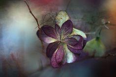 Remember Purple Naryre Flower Photos