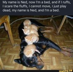 Love Cute Animals shares pics of playful animals, cute baby animals, dogs that stay cute, cute cats and kittens and funny animal images. Animal Jokes, Funny Animal Memes, Cute Funny Animals, Cute Baby Animals, Cat Memes, Funny Memes, Funniest Memes, Animal Names Funny, Wild Animals