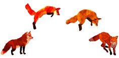 jumping #fox
