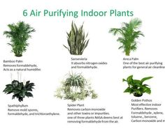 Greenery increases the oxygen level inside. There is a welcoming environment in the place if there are plants. We at Inscape Indoor Plant Hire have best Indoor Plant Collection for you in Melbourne. Browse our stylish and Best and Quality range of indoor plants now!