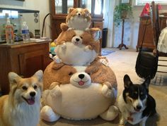 71 Reasons We Need To SAVE CORGIS FROM EXTINCTION