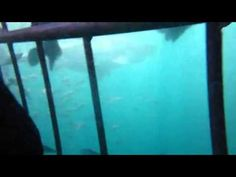 ASEC Great White Shark Dive 4 with African Shark Eco-Charters