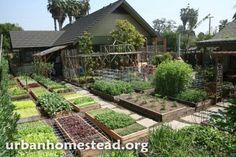 family produces 6000 pounds of food, growing food on acre of land, high yield urban farming, los The Farm, Small Farm, Farm Gardens, Outdoor Gardens, Patio Grande, Homestead Farm, Urban Homesteading, Hobby Farms, Urban Farming