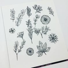 ink doodles by @inga.bart . . . #doodles #inkdoodle #linework #inkflowers #inktober #inked #ink