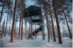 Treehouse in Sweden