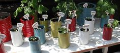 tin can seed starters