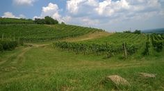 Hungarian wine news and events about the 22 wine regions of Hungary. Volcano, Hungary, Wines, Vineyard, Outdoor, Outdoors, Vine Yard, Vineyard Vines, Outdoor Games